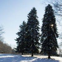 Зима в Кисловодском парке :: Герасим Харин