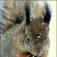 Белка зимой  /5/ :: Сергей