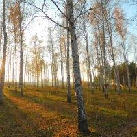 Осенняя пора :: Максим Горловка