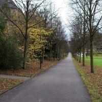 Баден-Баден, осень, дорога в горы.. :: Александр