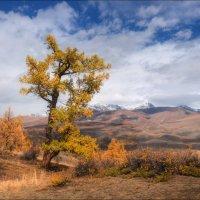 Алтайская осень :: Влад Соколовский