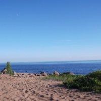 Песчаный берег :: Svetlana Lyaxovich