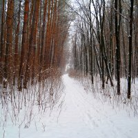По зимним дорожкам.. :: Андрей Заломленков