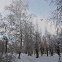 Зимнее утро :: Викторина Срыбна