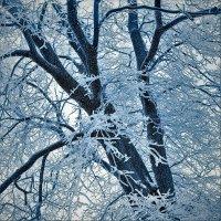 Вологодская зима :: Валерий Талашов