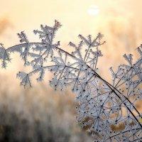 Зимние цветы. :: Лилия .