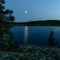 белая ночь :: Galina