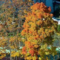 Оранжевая осень :: Виталий Авакян