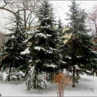 В Ростов пришла зима :: Нина Бутко
