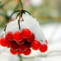 Калина, калина – ягода зимняя. Как же горька ты, и как хороша! :: Валентина ツ ღ✿ღ