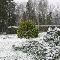Выпал снег :: Виктор