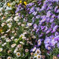 Цветы в октябре :: Софи Sintetsu Сургучева