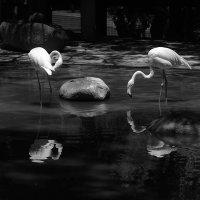 Фламинго :: Юрий Вайсенблюм