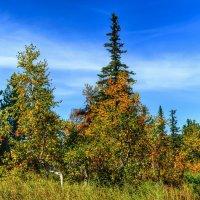 Осень в Горной Шории :: Милешкин Владимир Алексеевич
