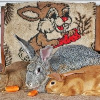 Кролики и морковки :: Андрей Майоров