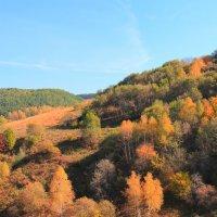 Золотая осень на Кавказских Минеральных водах. :: Vladimir 070549