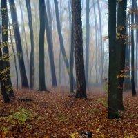 мистический лес :: Elena Wymann