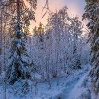 Кружева заснеженного леса :: Фёдор. Лашков