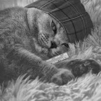 О,  я самый болЬной в мире кот...., шо стоишь записывай рецепт... :: Лилия .