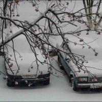 snow :: Юлия Денискина