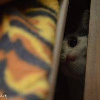 Маленькая охотница :: Софи Sintetsu Сургучева