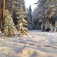 Одним коротким зимним днём :: Юрий Кузмицкас
