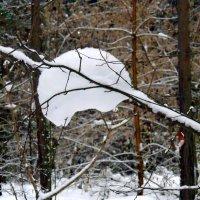Чудеса природы. :: Мила Бовкун