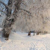 Зима- рукодельница :: Павлова Татьяна Павлова