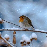 Малиновка в снегу :: Светлана Стрижова