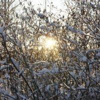 Начало декабря.  Сказка на ветках узором играет... :: Елена Павлова (Смолова)