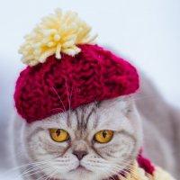 Одевайтесь теплее! :: Дина Горбачева
