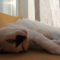 Я не сплю) :: Дмитрий