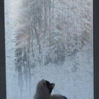 первый день декабря :: Дмитрий