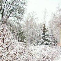 Тихо падал снег... :: super-krokus.tur ( Наталья )