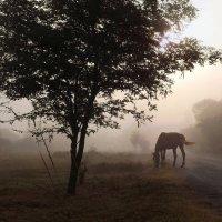 взмах в тумане.ф.. :: Дмитрий Крылов
