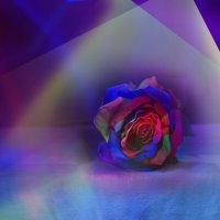 роза :: михаил