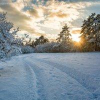 Неожиданная Зима в Крыму. :: Ольга