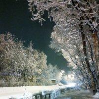 Пришла зима... :: Анна Приходько