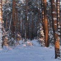 Прошлогодний вспомнился декабрь... :: Лесо-Вед (Баранов)
