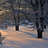 прошлогодняя зима :: Наталия П
