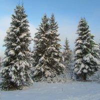 Лесные красавицы :: Анатолий