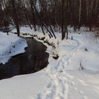 Зима. Фотограф торжествует :: Андрей Лукьянов