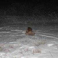 снежная собака :: Наташа Пасакас