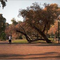 Осенью в парке :: Lmark