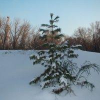 Маленькой елочке холодно зимой... :: марина ковшова