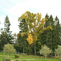 Монастырский сад :: Олег Попков