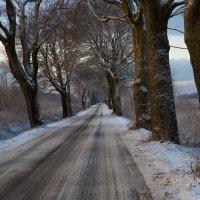 Утро, зимняя дорога :: Виталий Латышонок