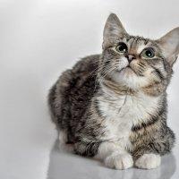 Кошка :: Эдуард Пиолий