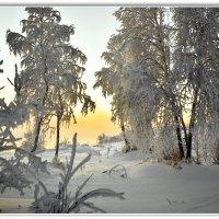 Утро зимы :: Василий Хорошев