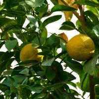 Просто апельсины в декабре :: Kristina Suvorova
